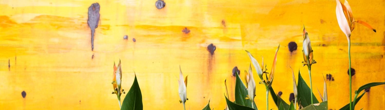 Gėlės geltoname fone
