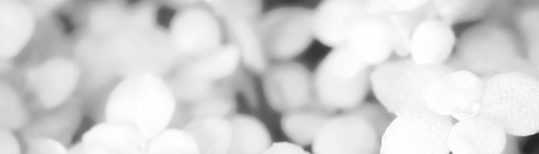 balti žiedlapiai (juoda balta)