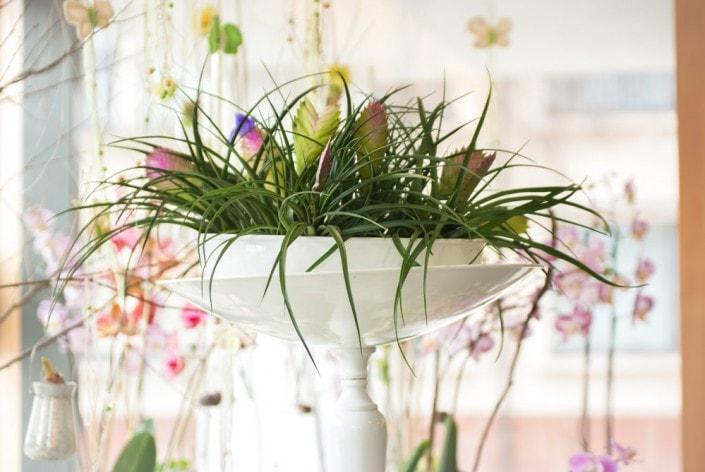 Kambarinė gėlė aukštoje keraminėje vazoje ant kojelės