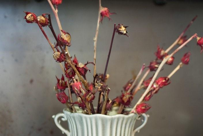 Kinrožės šakelės Bonturi Casa vazoje