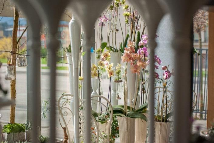 Orchidėjose Ritos gėlių salone