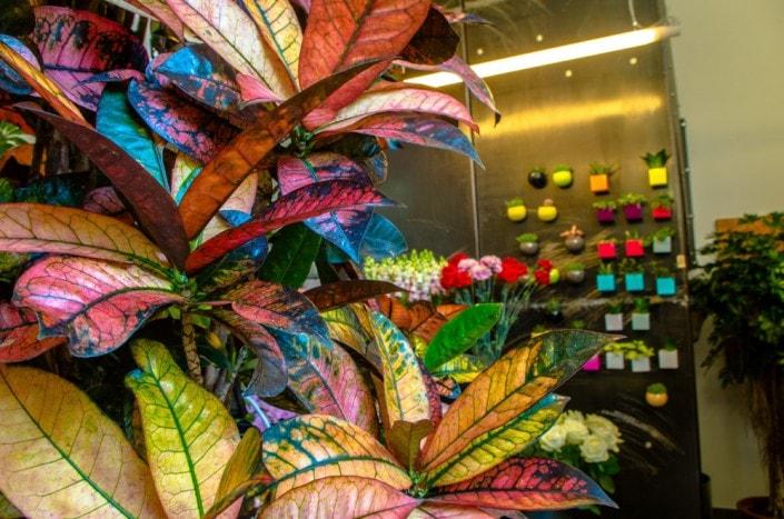 Kambarinių gėlių lapai Ritos gėlių salone