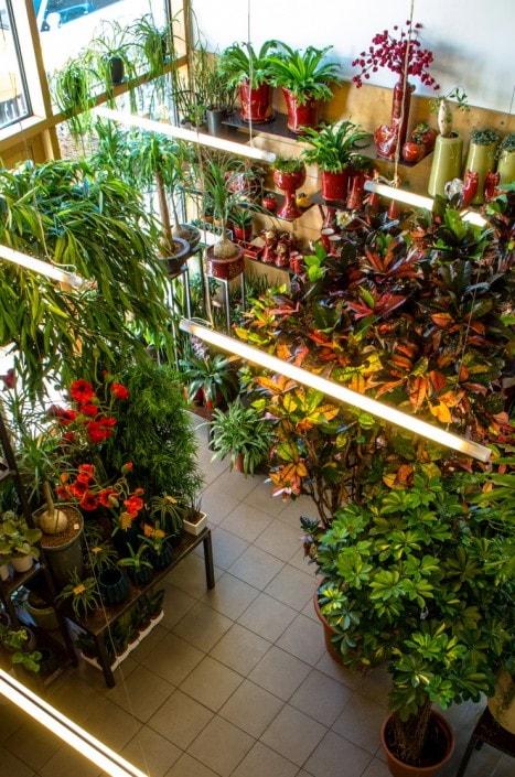 Ritos gėlių salono pirmasis aukštas