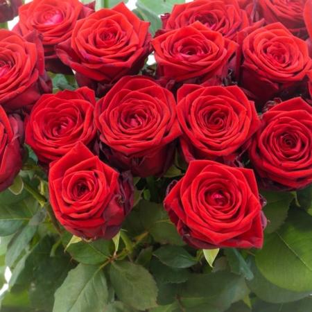 Raudonos rožės Red Naomi iš arti