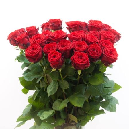 Raudonos rožės Red Naomi