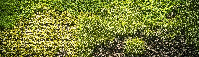 Žaliosios sienos fragmentas