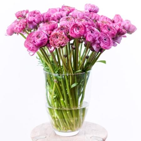 Violetiniai vėdrynai stiklo vazoje