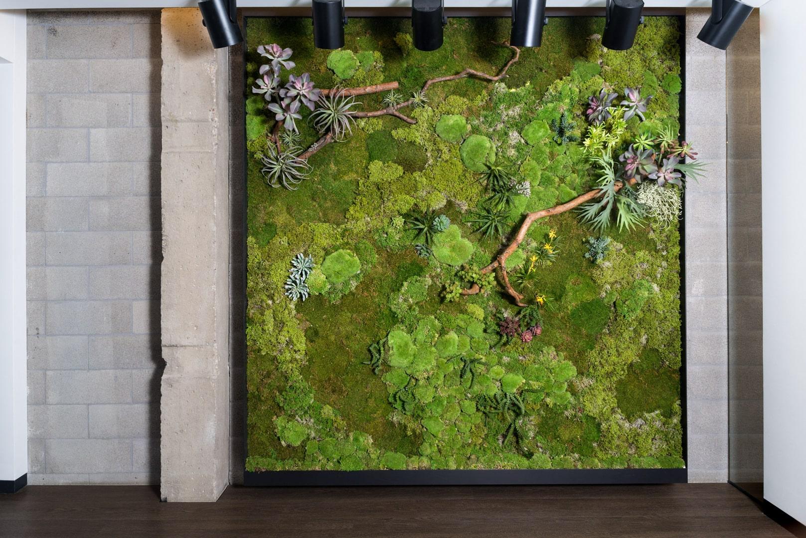 Samanų paveikslas Nojaus sėklų biure